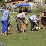 Bermuda Kennel Club Dog Show, October 23 2016-204