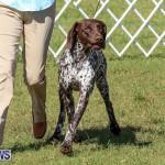 Bermuda Kennel Club Dog Show, October 23 2016-205