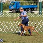 Bermuda Kennel Club Dog Show, October 23 2016-208