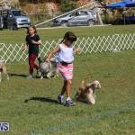 Bermuda Kennel Club Dog Show, October 23 2016-21