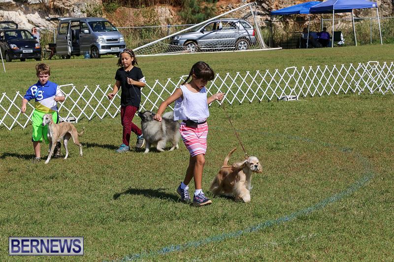 Bermuda-Kennel-Club-Dog-Show-October-23-2016-21