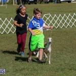 Bermuda Kennel Club Dog Show, October 23 2016-22