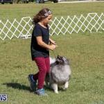 Bermuda Kennel Club Dog Show, October 23 2016-23