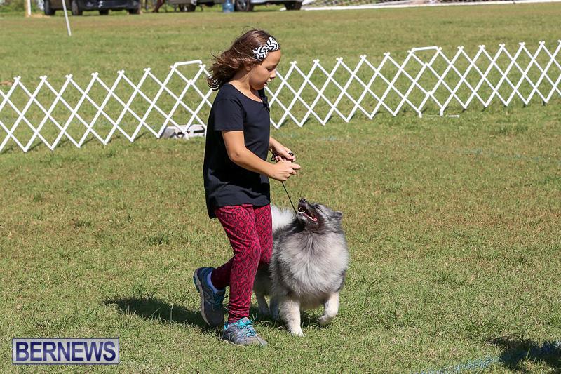 Bermuda-Kennel-Club-Dog-Show-October-23-2016-23
