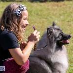 Bermuda Kennel Club Dog Show, October 23 2016-25