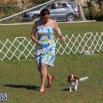 Bermuda Kennel Club Dog Show, October 23 2016-26