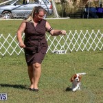 Bermuda Kennel Club Dog Show, October 23 2016-28