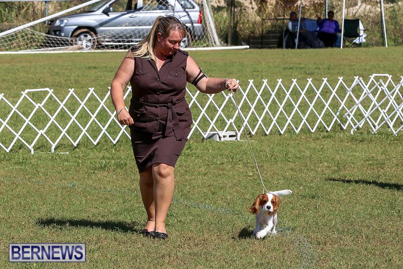 Bermuda-Kennel-Club-Dog-Show-October-23-2016-28