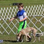 Bermuda Kennel Club Dog Show, October 23 2016-3