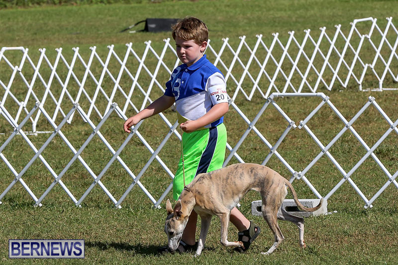 Bermuda-Kennel-Club-Dog-Show-October-23-2016-3