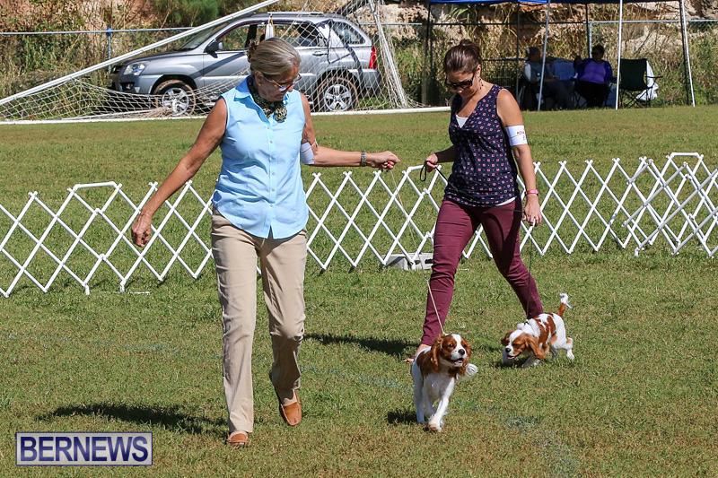 Bermuda-Kennel-Club-Dog-Show-October-23-2016-31