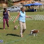Bermuda Kennel Club Dog Show, October 23 2016-33