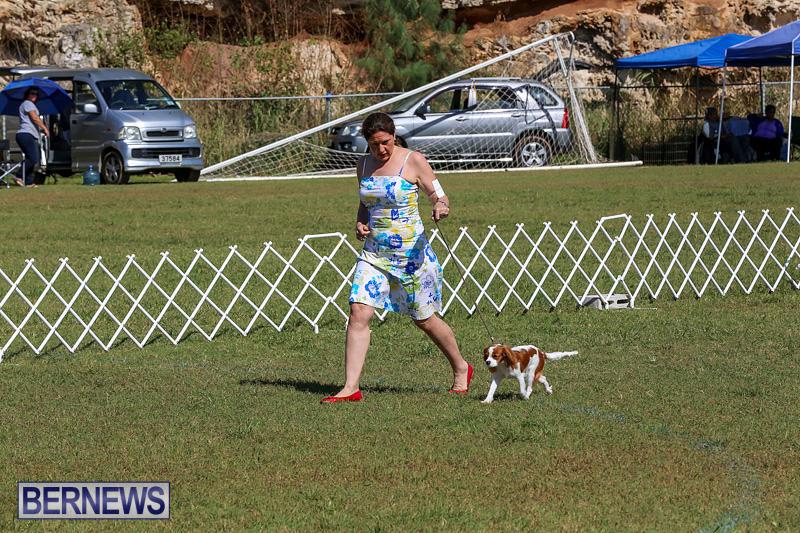 Bermuda-Kennel-Club-Dog-Show-October-23-2016-37