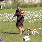 Bermuda Kennel Club Dog Show, October 23 2016-38