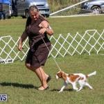 Bermuda Kennel Club Dog Show, October 23 2016-39