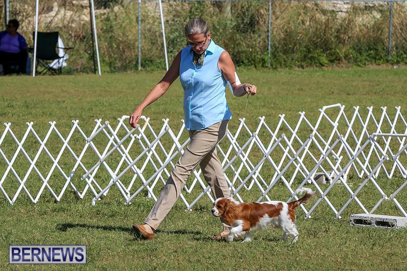 Bermuda-Kennel-Club-Dog-Show-October-23-2016-40