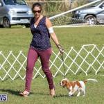 Bermuda Kennel Club Dog Show, October 23 2016-41