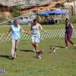 Bermuda Kennel Club Dog Show, October 23 2016-45