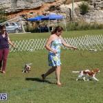 Bermuda Kennel Club Dog Show, October 23 2016-46