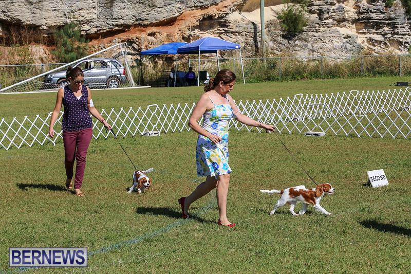 Bermuda-Kennel-Club-Dog-Show-October-23-2016-46