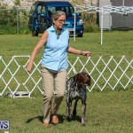 Bermuda Kennel Club Dog Show, October 23 2016-47