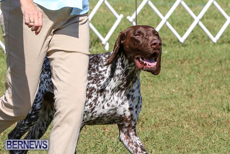Bermuda-Kennel-Club-Dog-Show-October-23-2016-48