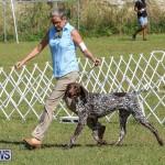 Bermuda Kennel Club Dog Show, October 23 2016-49