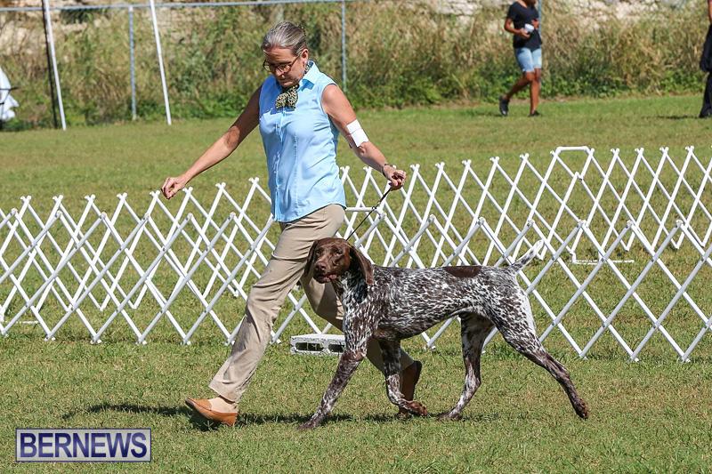 Bermuda-Kennel-Club-Dog-Show-October-23-2016-49