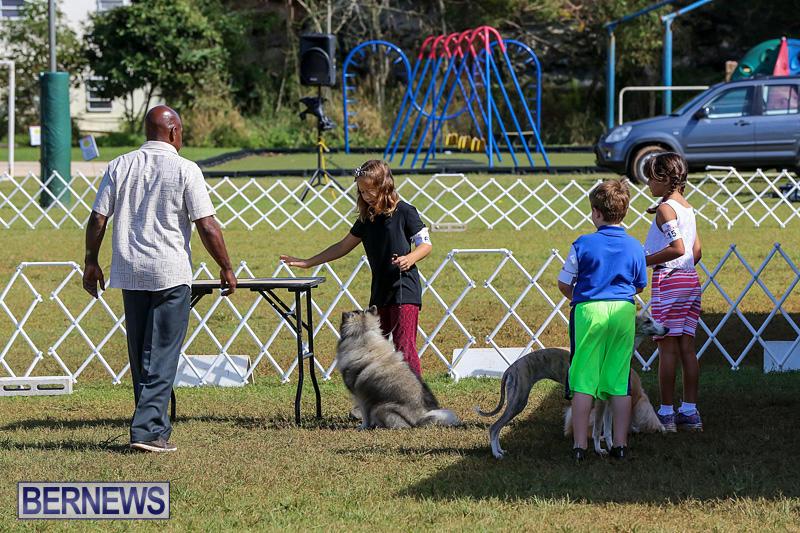 Bermuda-Kennel-Club-Dog-Show-October-23-2016-5