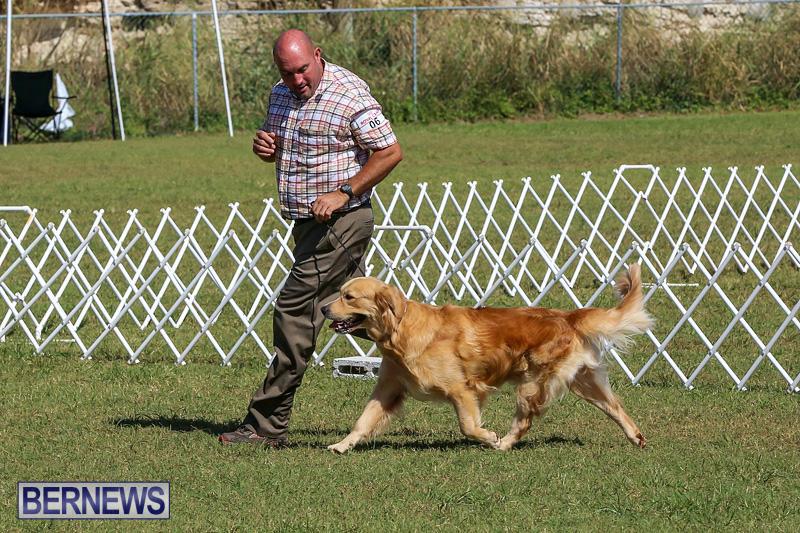 Bermuda-Kennel-Club-Dog-Show-October-23-2016-50