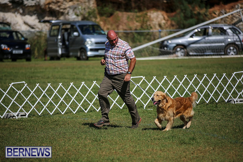 Bermuda-Kennel-Club-Dog-Show-October-23-2016-51