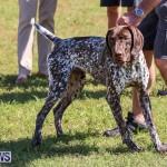 Bermuda Kennel Club Dog Show, October 23 2016-53
