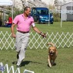Bermuda Kennel Club Dog Show, October 23 2016-55