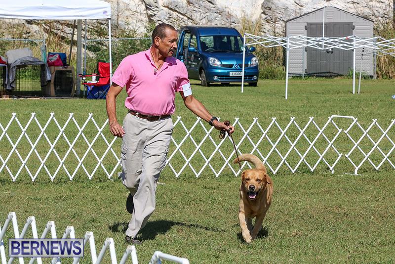 Bermuda-Kennel-Club-Dog-Show-October-23-2016-55