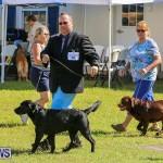 Bermuda Kennel Club Dog Show, October 23 2016-56
