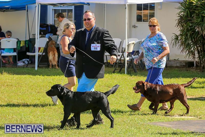 Bermuda-Kennel-Club-Dog-Show-October-23-2016-56