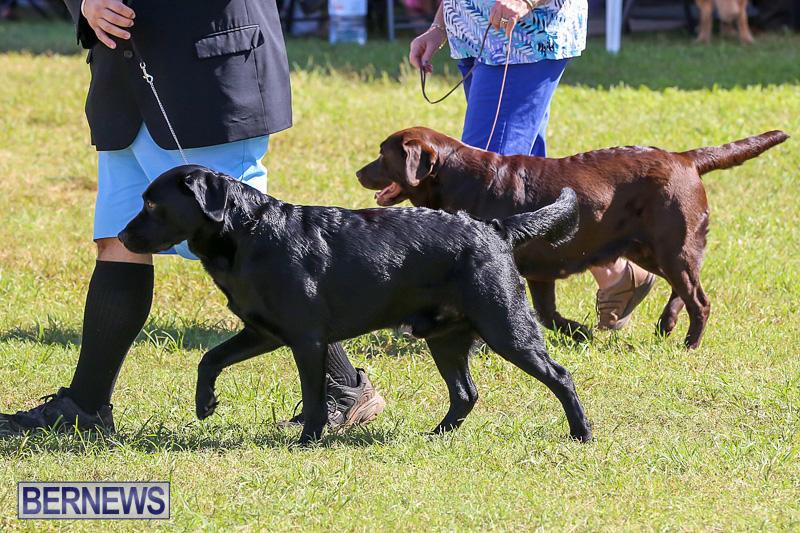 Bermuda-Kennel-Club-Dog-Show-October-23-2016-57