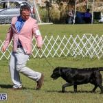 Bermuda Kennel Club Dog Show, October 23 2016-59