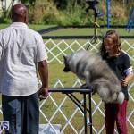 Bermuda Kennel Club Dog Show, October 23 2016-6