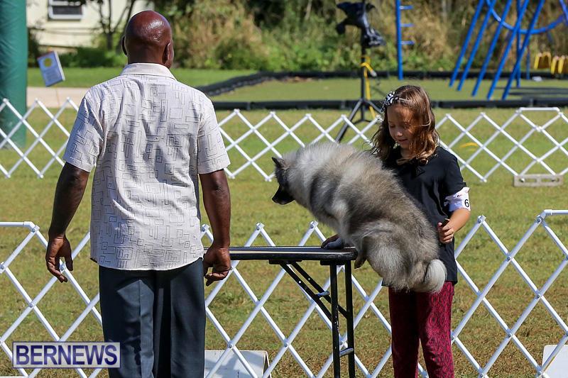 Bermuda-Kennel-Club-Dog-Show-October-23-2016-6