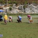 Bermuda Kennel Club Dog Show, October 23 2016-61