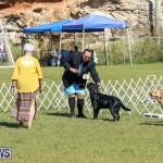 Bermuda Kennel Club Dog Show, October 23 2016-62