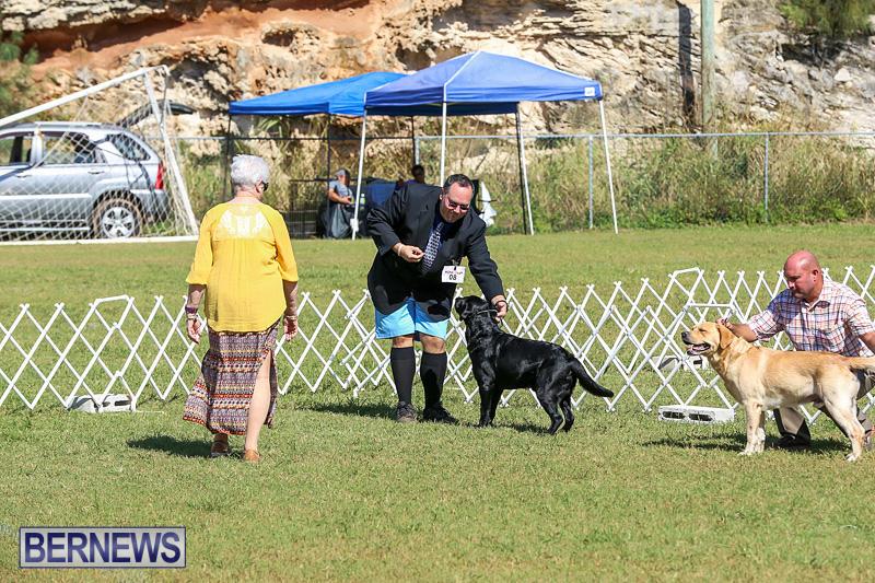 Bermuda-Kennel-Club-Dog-Show-October-23-2016-62