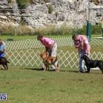Bermuda Kennel Club Dog Show, October 23 2016-63