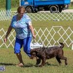 Bermuda Kennel Club Dog Show, October 23 2016-64
