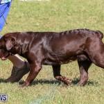 Bermuda Kennel Club Dog Show, October 23 2016-65