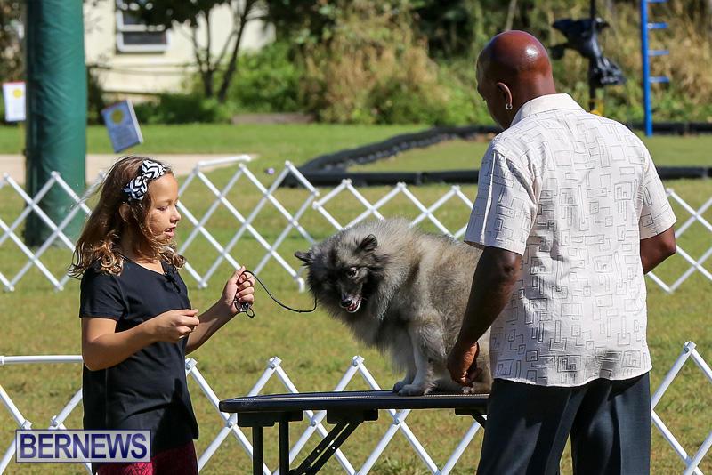 Bermuda-Kennel-Club-Dog-Show-October-23-2016-7