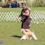 Bermuda Kennel Club Dog Show, October 23 2016-73