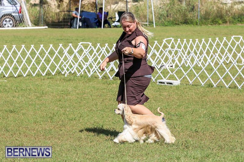 Bermuda-Kennel-Club-Dog-Show-October-23-2016-73