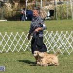 Bermuda Kennel Club Dog Show, October 23 2016-75